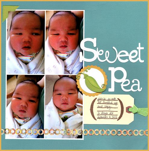 Sweetpea500