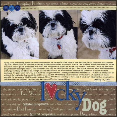 Lucky_dog
